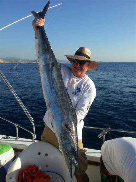 Cabo Fishing Reports   Official Reports From Local Charters