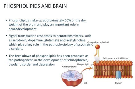 Antiphospholipid Syndrome and the Brain (Neuropsychiatry
