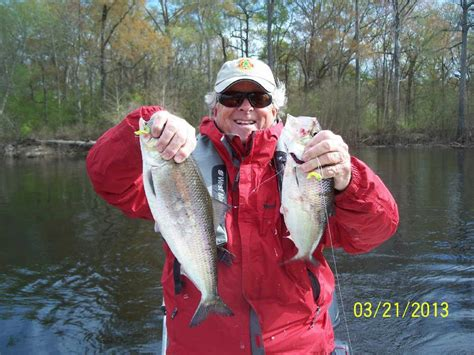 FISHING FORECAST: Shad finally showing up in the Ogeechee