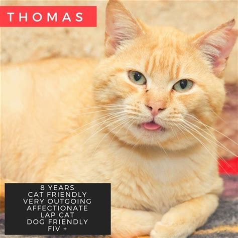 Pets for Adoption at Humane Society of the Tennessee