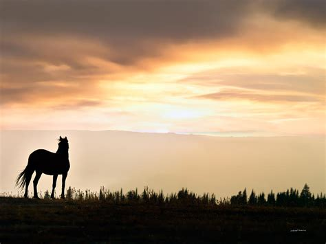 """A Year of Being Here: Wendell Berry: """"The Sorrel Filly"""""""