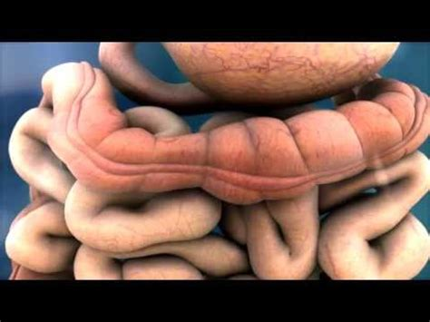 3D Medical Animation - Peristalsis in Large Intestine