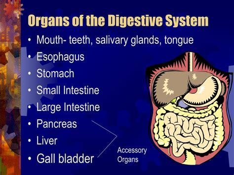 PPT - The Digestive System PowerPoint Presentation - ID