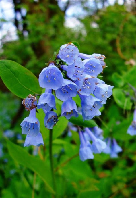 Top 10 Beautiful Shade - Loving Flowers - Page 4 of 10