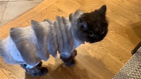 This Cat's Bizarre Haircut Is Going Viral on Social Media