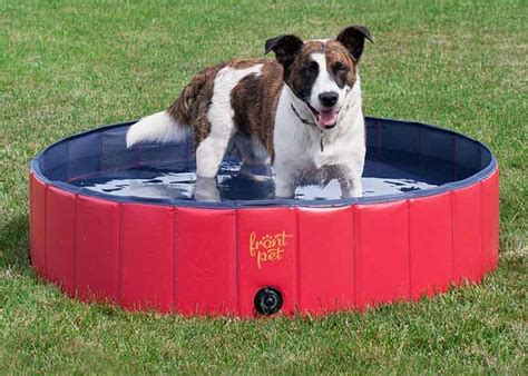 The Best Dog Water Toys For Summer Fun In The Sun