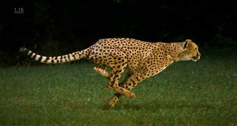 How Fast Can a Cheetah Run?   IT Interview Guide