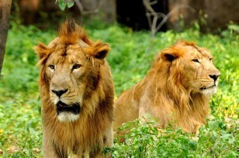 9 Extraordinary Animals That Makes The Wildlife in India
