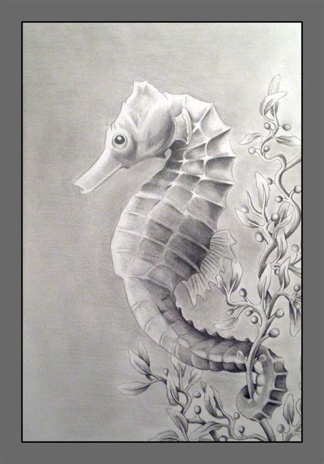 Seahorse by Fireberd904 on deviantART   Seahorse drawing