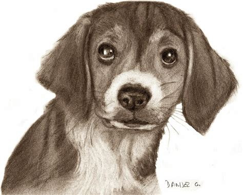 Free Drawings Of Dog, Download Free Clip Art, Free Clip