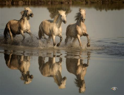 7 Tips for Photographing Running Horses - which you can