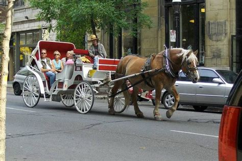 Nashville Carriage Rides: 10Best Attractions Reviews