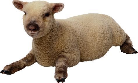 Images Best Free Clipart Sheep PNG Transparent Background
