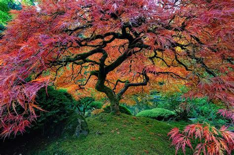 15 Of The Most Beautiful Trees Ever Photographed