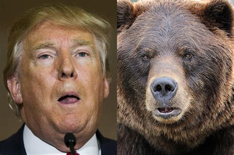 Newt Gingrich keeps comparing Donald Trump to the grizzly