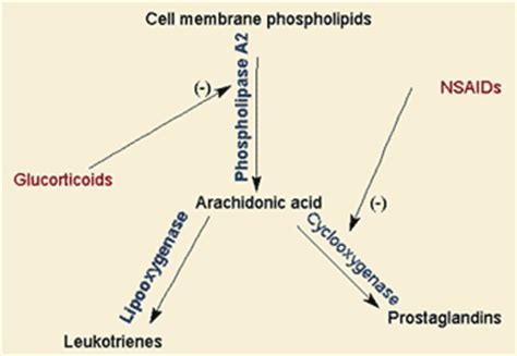 Phospholipases, PUFA, and Inflammation – Functional